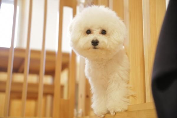 Pet friendly accommodation dog image00002