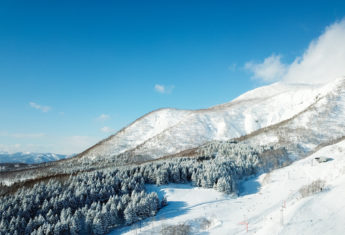 Drone Blue Skies Winter Trees 01 11 18 2