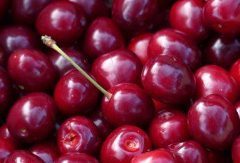 Cherry 167369 1920