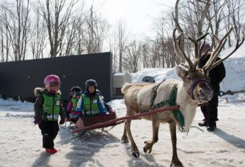 Reindeer rides, Ki Niseko