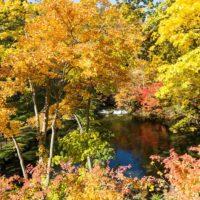 Fukidashi Park Autumn Leaves 2