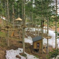 Edit Nac Tree Trekking 36