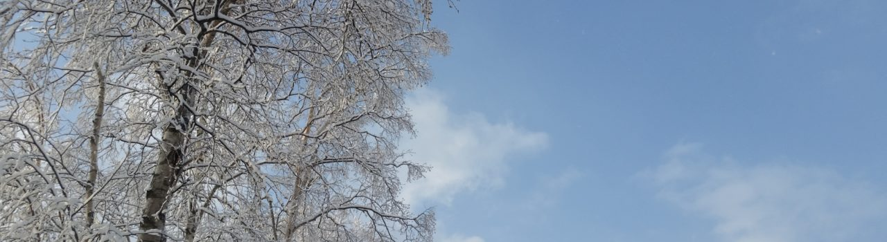 2015-12-17-december-snow-trees-blue-sky