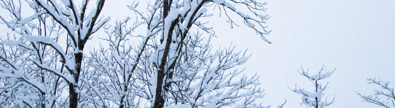 Winter Snow Trees 12 28 17 5