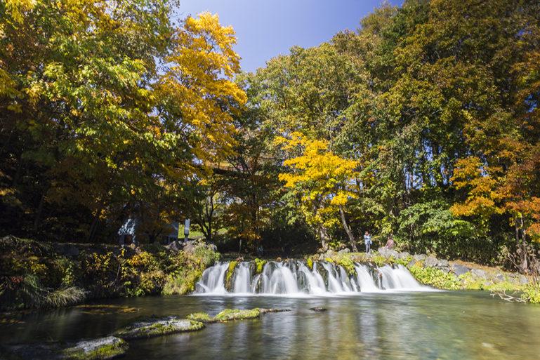 Fukidashi Park Spring And Autumn Leaves 2