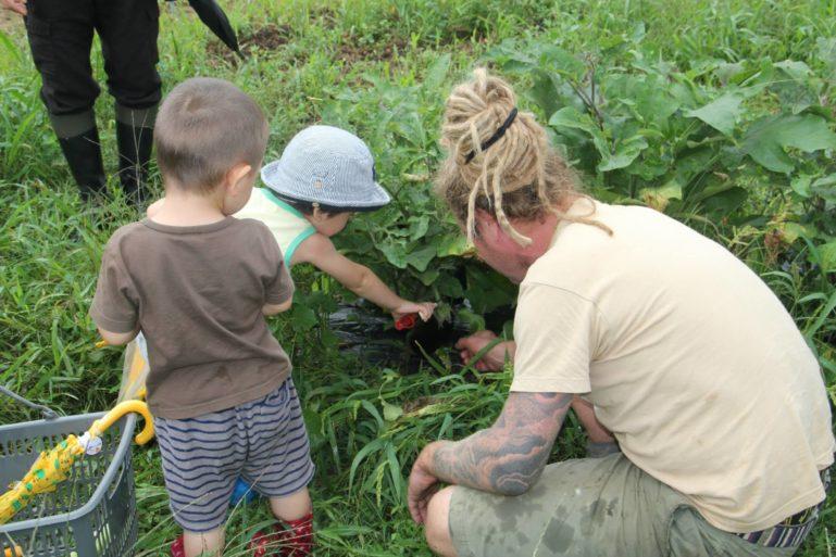 Green Farm 2