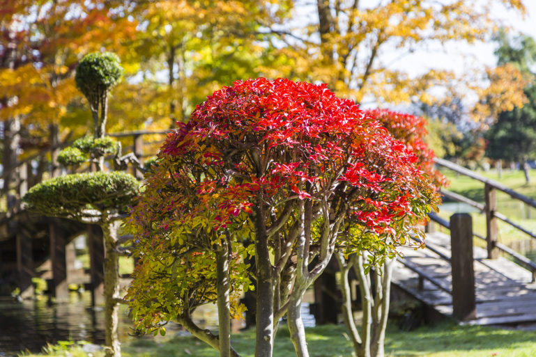Red Leaves At Fukidashi Park