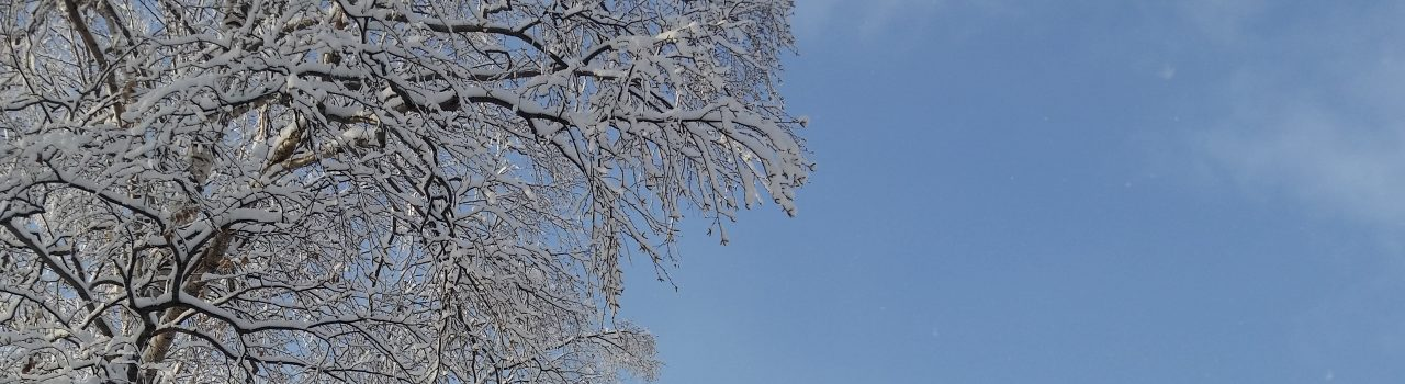 blue-sky-snowy-tree-hero-december