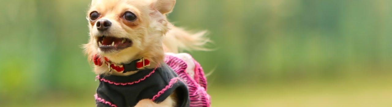 Pet friendly accommodation dog image00004