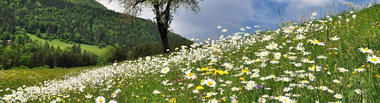 Spring Flower Fields Pixabay