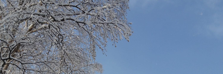 blue-sky-snowy-tree-hero-december